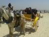 Visite du Caire (cycle préparatoire): 5 avril